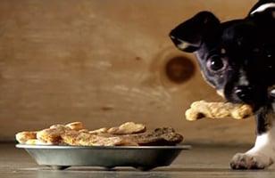 Photo Recette Biscuits pour Chien